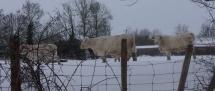 Fors Neige février 2012 (15)