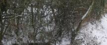 Fors Neige février 2012 (20)