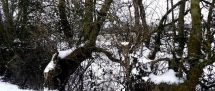 Fors Neige février 2012 (42)