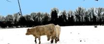 Fors Neige février 2012 (49)